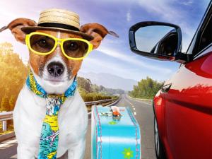 dicas para viajar com seu pet