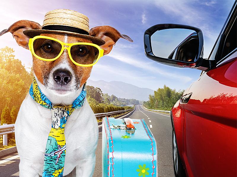 Confira 7 dicas para viajar com o seu animal de estimação com conforto e segurança